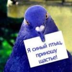 В погоне за Синей Птицей: простые секреты счастья