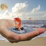 Как удержать золотую рыбку: верните состояние счастья в свою жизнь