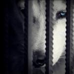 Негативные эмоции: дрессируем «животных»