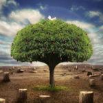 Сила рода, или Как обрести энергию жизни